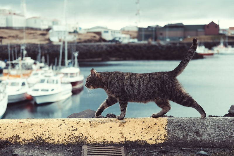 Tabby cat walking along a ledge next to a harbour